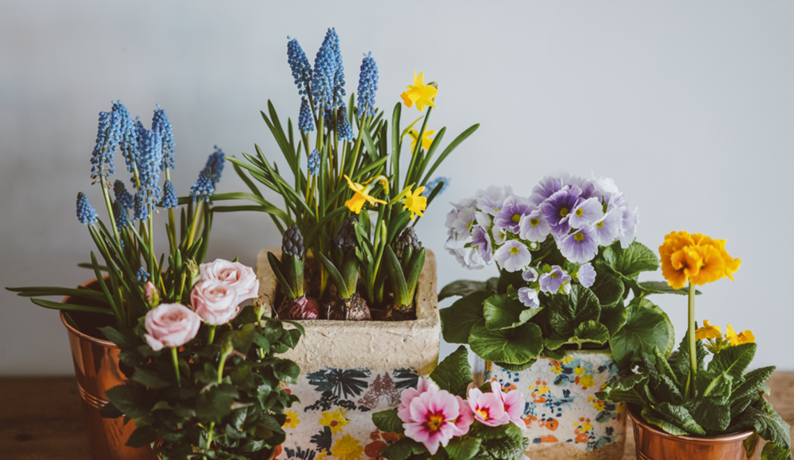 What's In Your Superannuation Flower Pot?