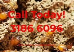 Termite and Pest Control North Brisbane