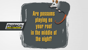 Possum Control gallery